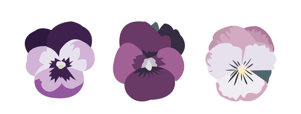 viole zilla visula design
